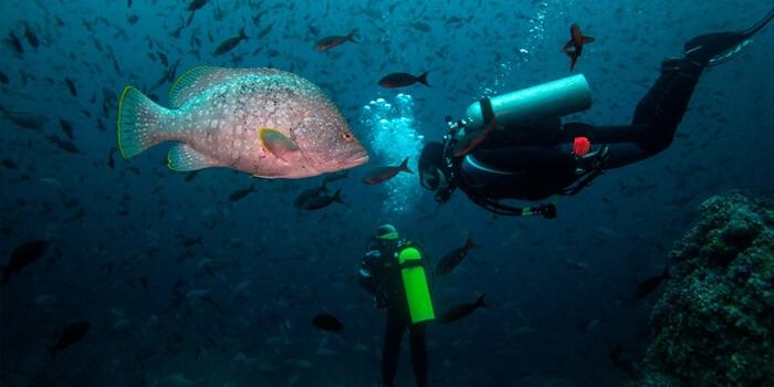 Galapagos_Aqua_Tauchen