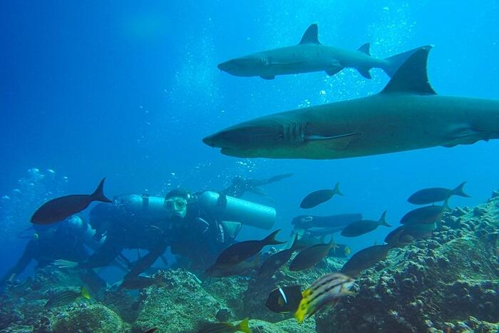 Galapagos_Aqua_Taucher