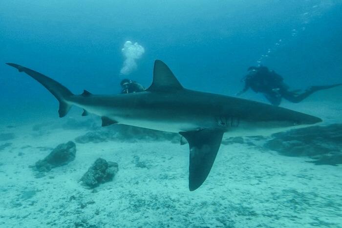 Galapagos_Aqua_Hai