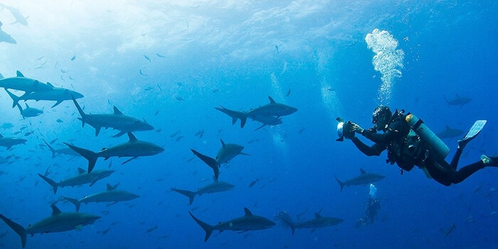 Galapagos_Aqua_Taucher_mit_Hai