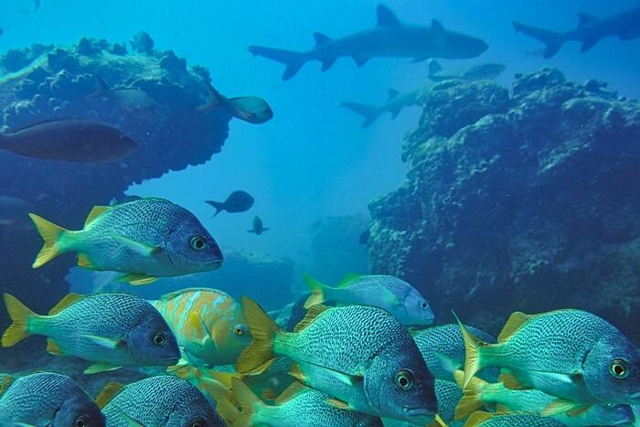 Galapagos_Aqua_Riff