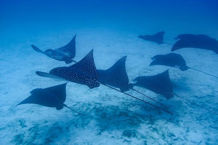 Galapagos_Aqua_Rochen