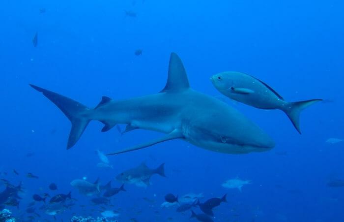 Galapagos_Aqua_Galapagoshai