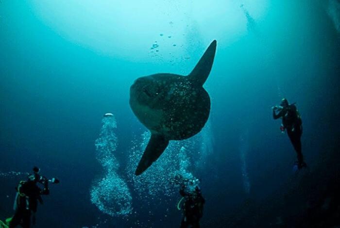 Galapagos_Aqua_MolaMola