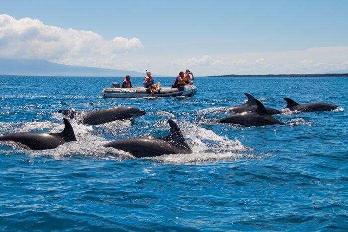 Galapagos_Aqua_Delfine